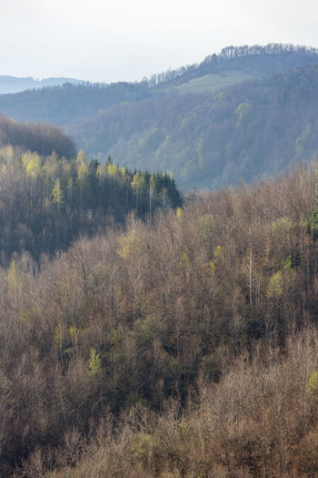 The Tara mountain, Serbia. Beauty In Nature Day Forest Growth Landscape Mountain Nature No People Outdoors Scenics Sky Tree