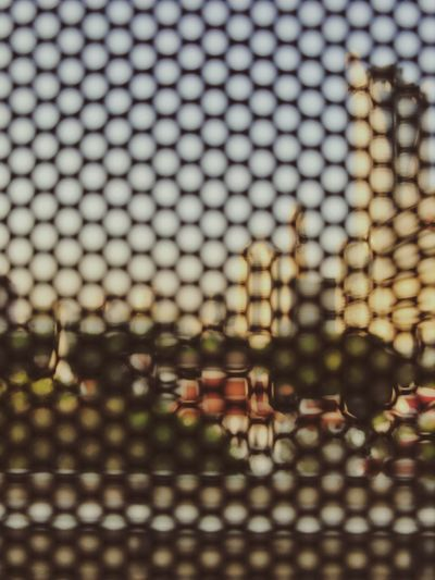 Close-up No People Backgrounds Spotted Textured  Outdoors Nature Day Blur From Windows Bts Skytrain Taken By IPhone 7 Plus