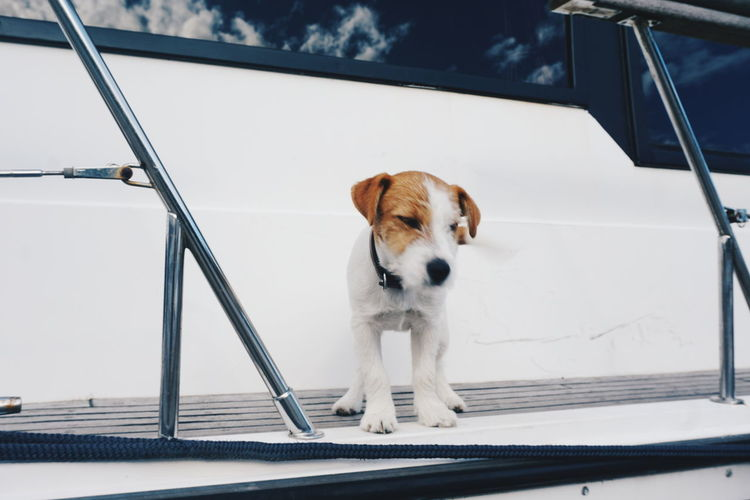 Puppy standing on ship