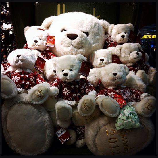 Chester bears