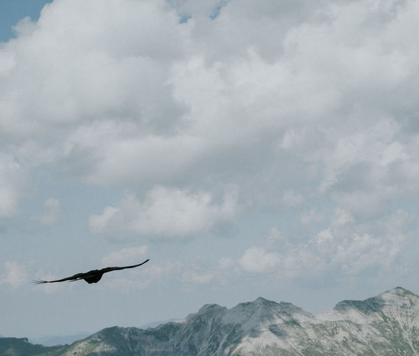 Dark bird is home Copy Space Karwendel Animal Wildlife Animals In The Wild Beauty In Nature Bird Cloud - Sky Copy Space In Sky Dark Bird Flight Flying Mid-air Mountain Mountain Range No People Outdoors Scenics - Nature Sky