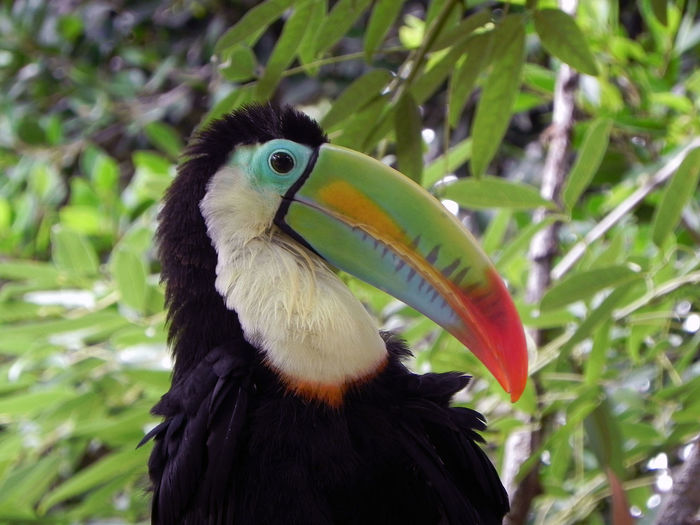 Close-Up Of Toucan