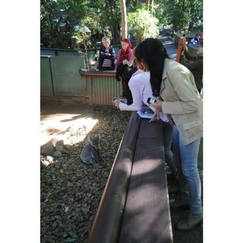 KoalaPine Brisbane Likeforlike Followme when something grey can't stop to walk in they cage :3 cute!