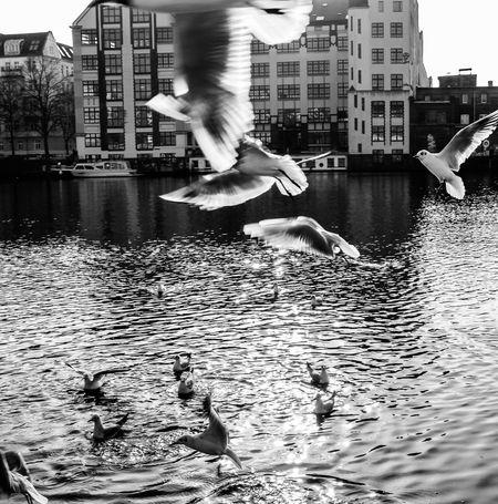 Feel The Journey Fly Flying Fliying Birds River Bird Vortices Freedom Feel Like A Bird East Side Gallery in Berlin, Deutschland