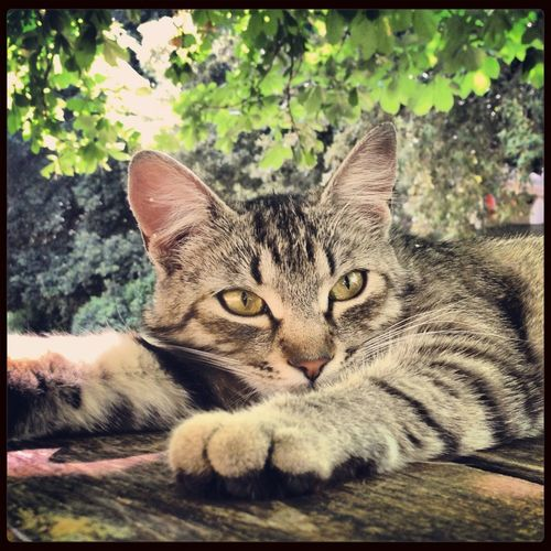 Cat ... Relaxing