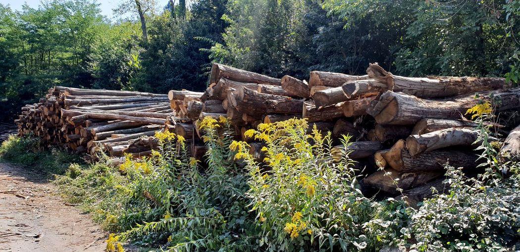 Tree trunks EyeEm Selects EyeEm Best Shots Eye4photography  EyeEm Gallery EyeEm EyeEmBestPics Treescollection Trees Lumber Lumber Industry Lumber Mill Lumberyard Tree Timber Wood - Material Lumber Industry Forestry Industry Woodpile Wood Tree Stump