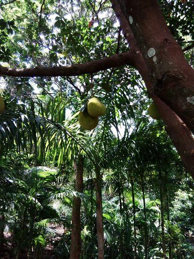 Fruits Lover Creation Of God ! !!!