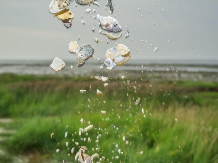 Water drops on flowers on field