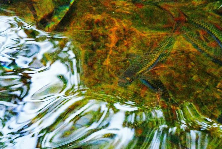 The eyes that see! Photography In Motion EyeEmNewHere Naturallight Water Ripples Travel Beautifullight Nature Art Photography Natureaddict Beauty In Nature Nature Waves Reflection Travelphotography Loveforphotography Fisheye InMotion Beautifullight Naturesway Beauty Fishy Travellife NatureAtItsBest Ripplesinthelake