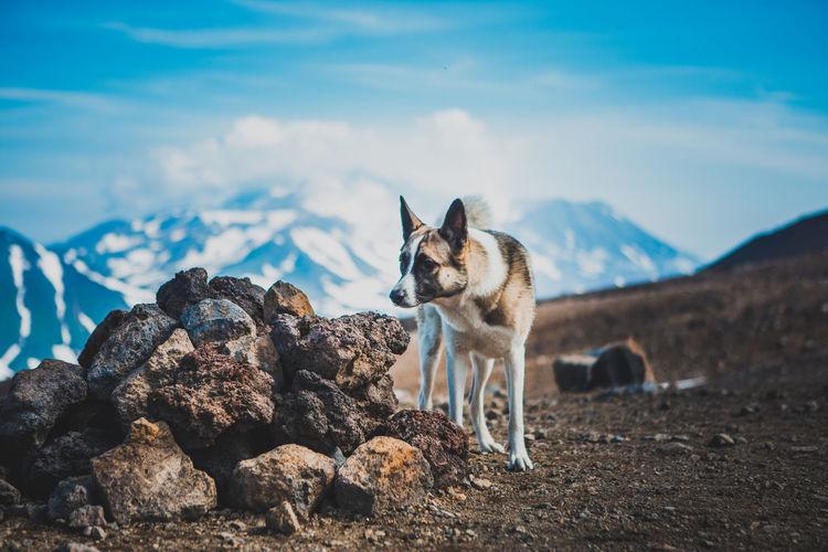 Dog looking away on rock