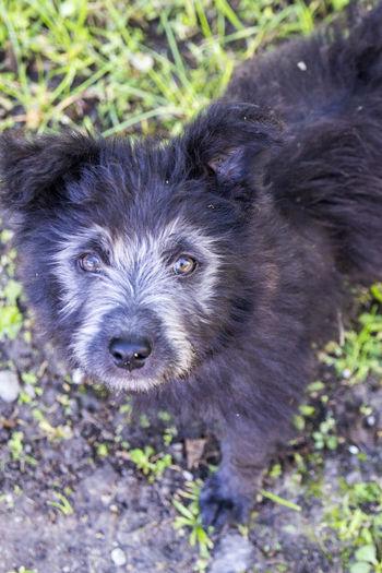 #MyDog #black  #cute #dog #familymember Black Color Dog Pets Portrait Young Animal