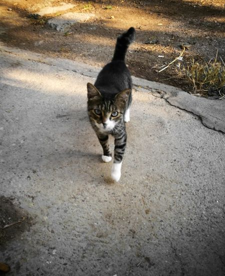 Domestic Cat Feline Animal Themes One Animal Domestic Animals Mammal Pets High Angle View Looking At Camera Day Outdoors Portrait No People