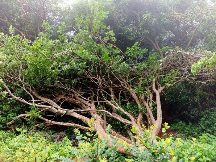 Fallen Tree Nature_collection Nature Photography Bangalore India