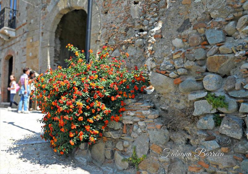 Beautiful Nature Calabria (Italy) Fiori Flower Collection Flowers Italy❤️ Pentedattilo Pentedattilo (RC) - Italy Pentidattilo Rovine