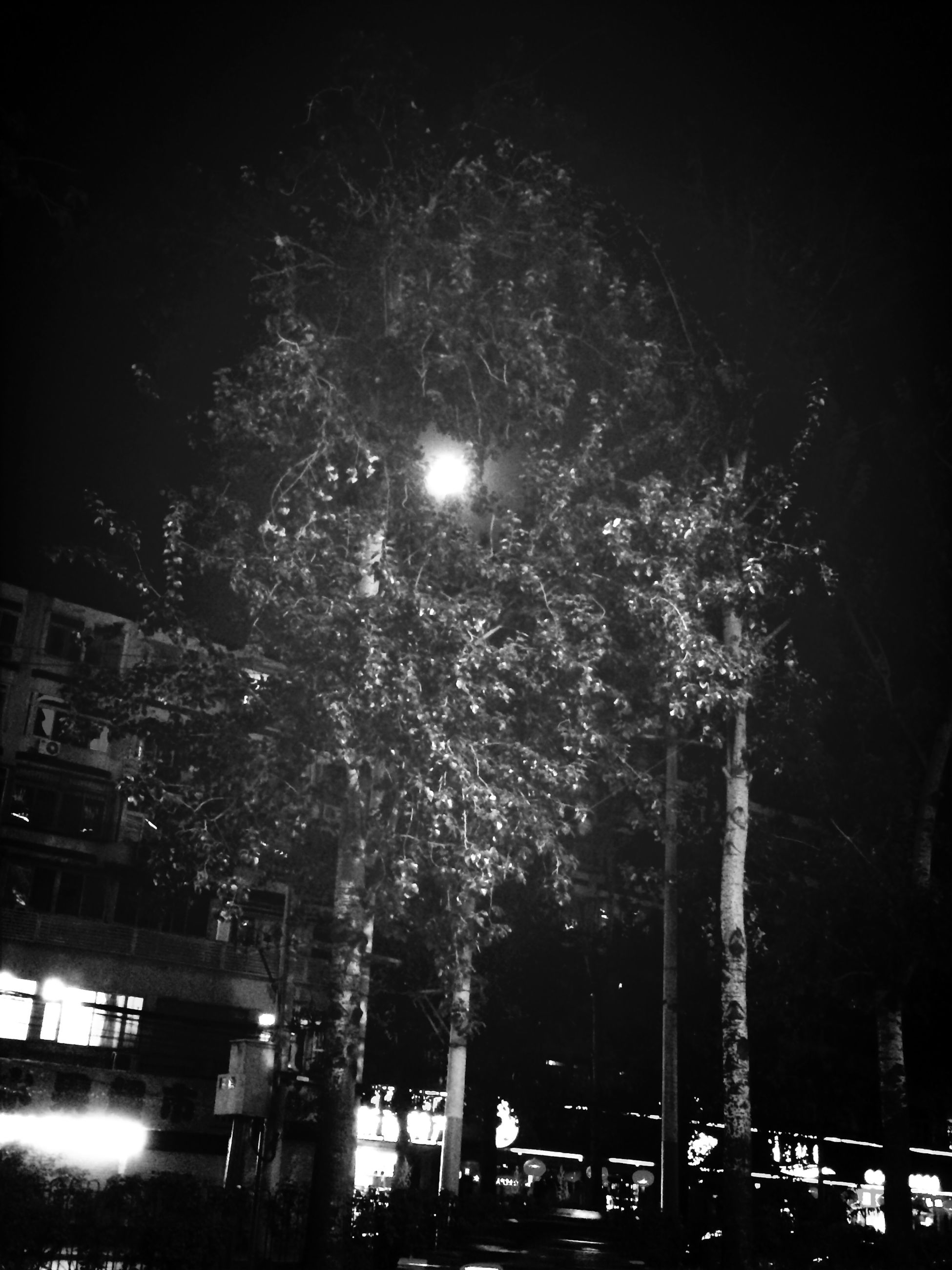 night, tree, illuminated, street light, low angle view, lighting equipment, sky, growth, branch, outdoors, light - natural phenomenon, street, nature, building exterior, built structure, glowing, car, no people, city, transportation