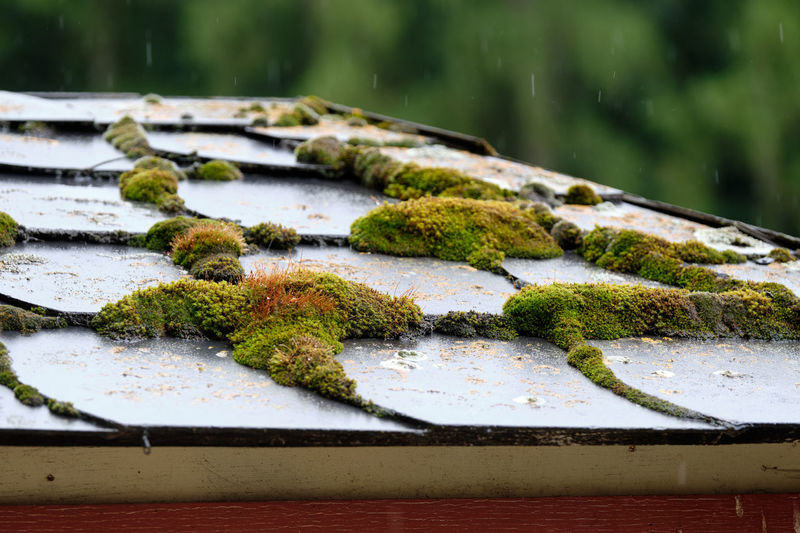 Close-up of moss on wood