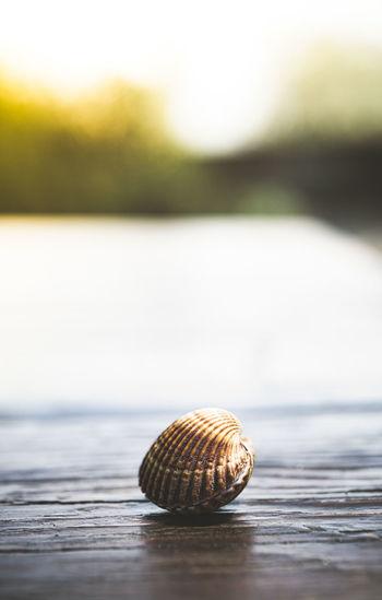 Close-up of seashell on a sea