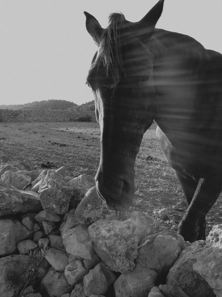Horse Menorca Nature Animals