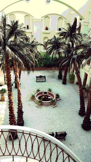 Arabian garden Arabian Garden Architecture Built Structure Tree Architecture Day Water Palm Tree No People Outdoors
