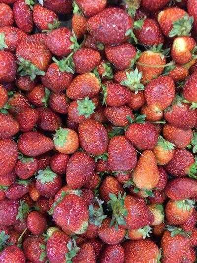 Morangos Strawberries