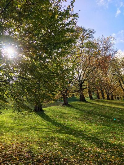 Winter Sun Nature Park November Winter Wintersun Rayofsunshine Plant Tree Growth Sunlight Beauty In Nature Sky Nature Grass Green Color Tranquility No People Day Land Field Outdoors Tranquil Scene Sunny Environment Scenics - Nature Landscape