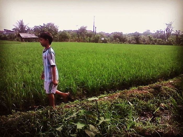 a boy, walk alone on a side of labolatory rice field of ministry of agriculture, indonesia tcitajam, 20sept15 Green Gogreen Ricefield Citayam Ketahananpanganlokal Swasembada Jalanjalan Gluten Ijoroyoroyo
