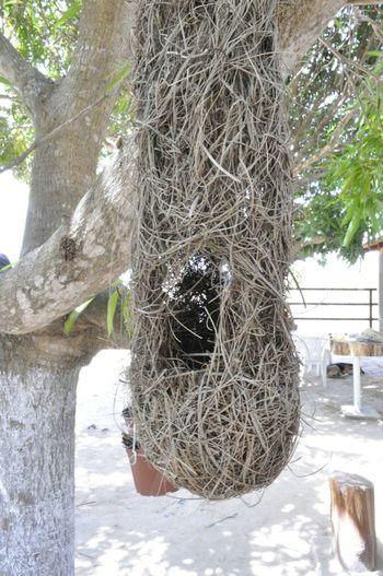 Ninho de passarinho. Ninho Nest