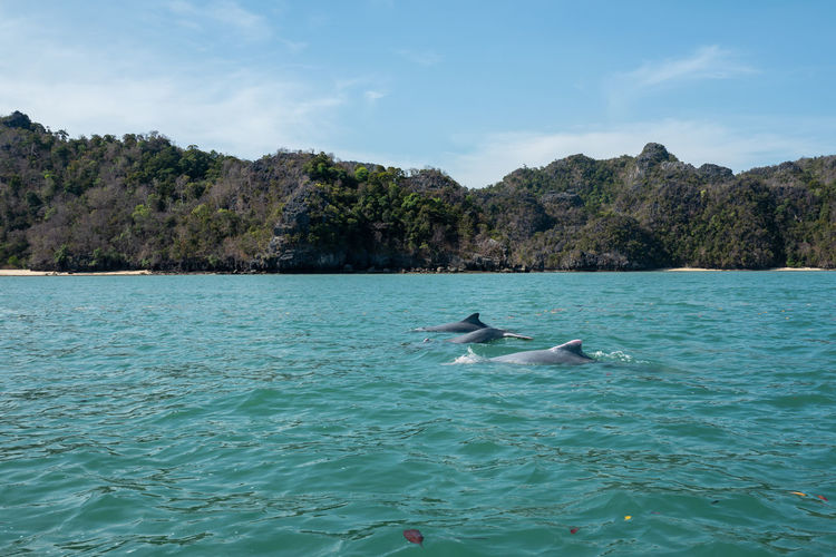 Langkawi Water Animal Themes Animal Vertebrate Animals In The Wild Animal Wildlife Waterfront Bird Beauty In Nature Group Of Animals Nature Swimming Day Sea Sky Tree Scenics - Nature Mountain No People Outdoors Marine