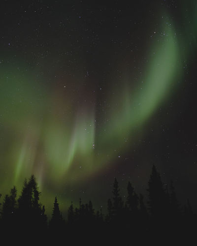 love travelling around Traveling Winter Astronomy Aurora Polaris Beauty In Nature Canada Cold Green Color Nature Night No People North Outdoors Sky Star - Space Tranquility Yellowknifaurora Yellowknife