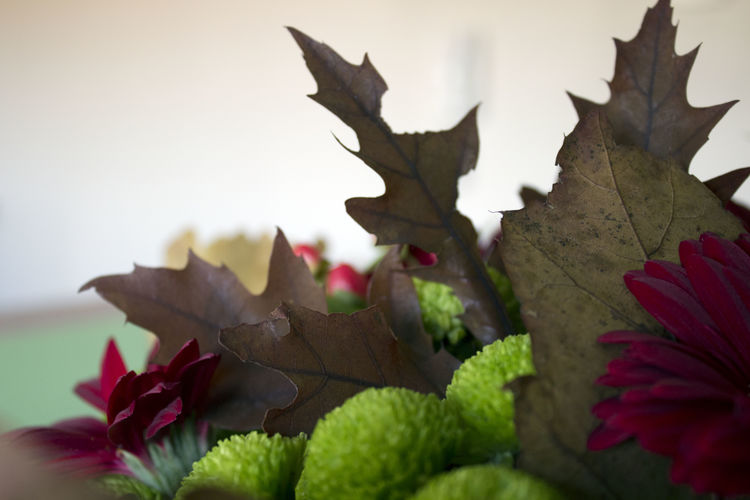 Leaf Plant Part Plant Beauty In Nature Nature Close-up Bunch Bunch Of Flowers Flower Red Green Autumn Floral Composition Fall Romantic Love Wedding Leaves Selective Focus Focus On Foreground Fragility