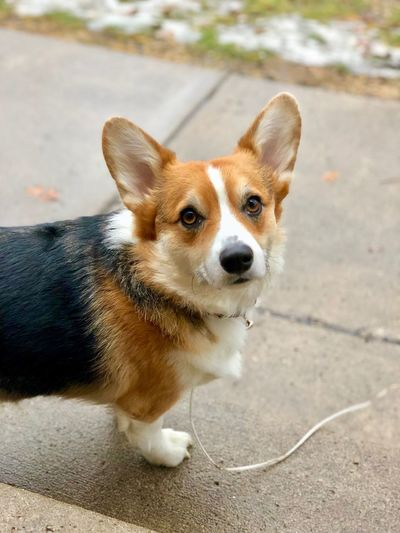 High angle portrait of dog
