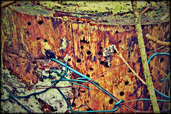Tree Trunk Wasps Nest Garden Nature Outdoor Photography No People