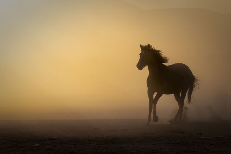 Horse on field during sunset