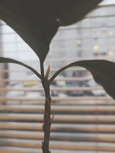 Close-up of plant against window