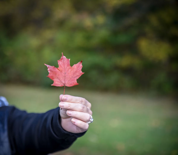 Midsection of woman holding maple leaf during autumn