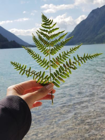 Cropped Image Of Hand Holding Plant Against Lake