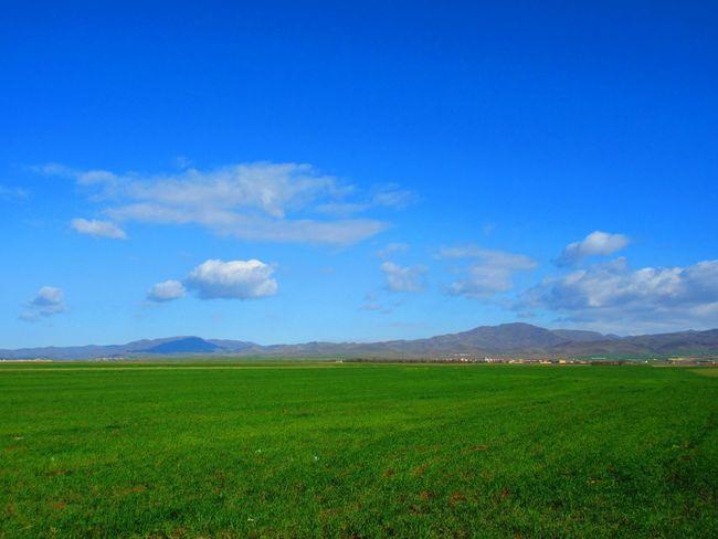 وقتی طبیعت دوباره زنده میشود. بهار طبیعت سبز آبی Spring Green Blue Nature Natural Natural Beauty