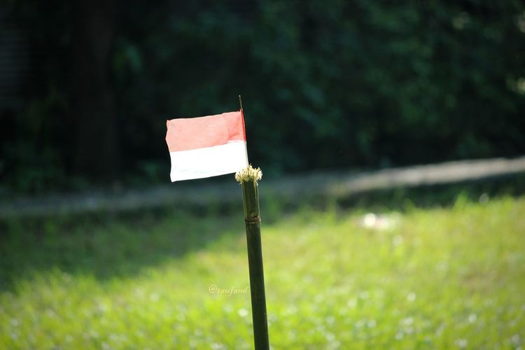 Flag of Indonesia Grass Area Green Flag Flags In The Wind  Flag Of Indonesia National Flag National Flags INDONESIA EyeEm Selects Eyeem Market Eyemphotography EyEmNewHere Eyem Best Shots Eyemphotos EyeEm Gallery Tree Close-up Grass Grass Area