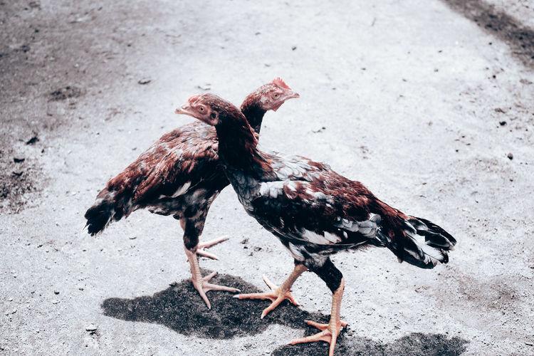 Dead bird on a land