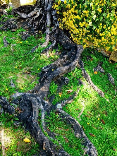 Tree Trunk Non-urban Scene Close-up Focus On Tree Root Jianshui, Yunnan, China Yellow Flowers Green Grass