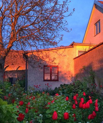 Enjoying Life Sunset Eye4photography  EyeEm Best Shots Flowers UNESCO World Heritage Site