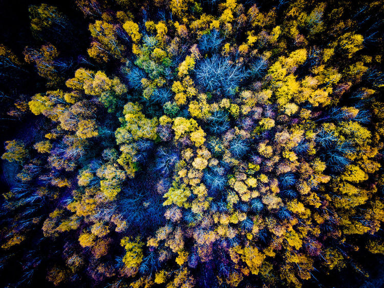 Halde Lydia Lydia Tree Backgrounds Beauty In Nature Close-up Day Full Frame Growth Nature No People Yellow