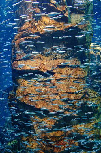 Fish Rock Fishtank Aquarium