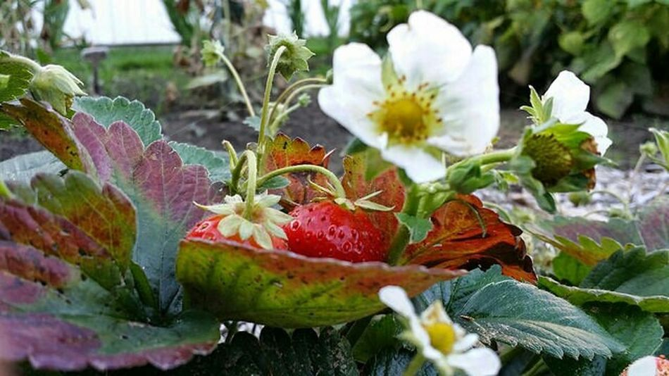 Garden Enjoying Life Des Fleurs