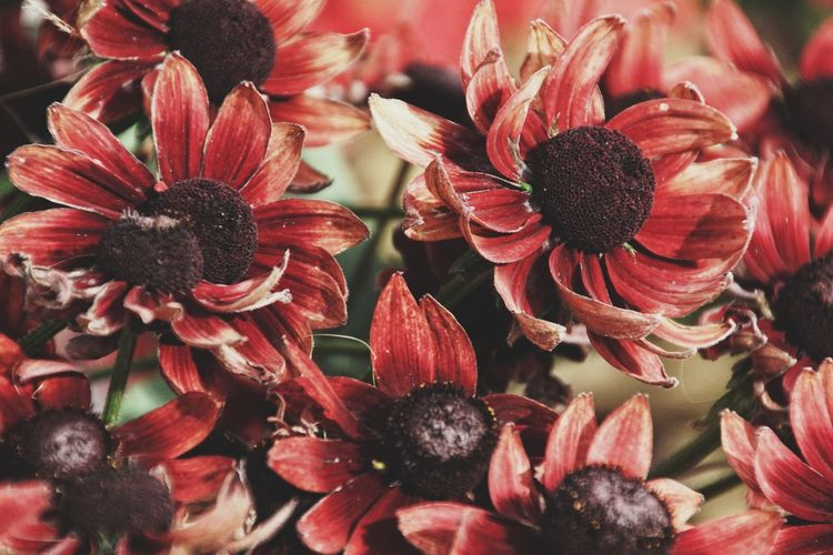 Niklas Storm Augusti 2018 Flower Head Flower Red Petal Close-up Plant Blossom In Bloom Blooming My Best Photo