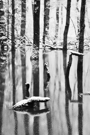 Patterns In Nature Peace Tree Water Reflections Winter Beauty In Nature Beauty In Nature Blackandwhite Cold Temperature Meditative Spot Outdoors Reflection Silence Snow Fall Tree Trunk Trunks Water Winter