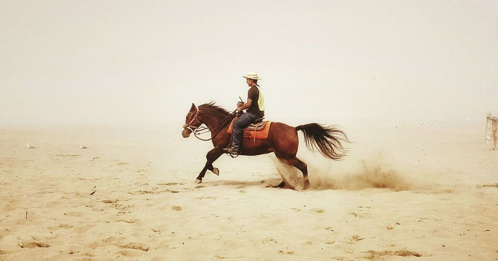 Catching Up. Samsung Galaxy S6. Ocean Shores, Washington (USA). Edited with Snapseed (F2). Protecting Where We Play Foggy Day Life Is A Beach Horse Horse Riding Ocean Shores Beachphotography Beach Life Horseriding Enjoying Life