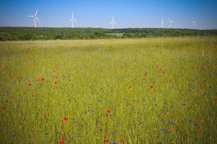 Environment Renewable Energy Environmental Conservation Wind Turbine Plant Alternative Energy Fuel And Power Generation Turbine Field Landscape Land Grass Beauty In Nature Sky Wind Power Nature Flower Green Color Growth Flowering Plant No People Outdoors Sustainable Resources Poppies  Bleuets