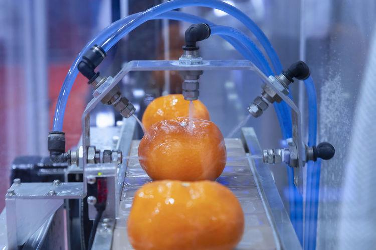 Close-up of oranges in container