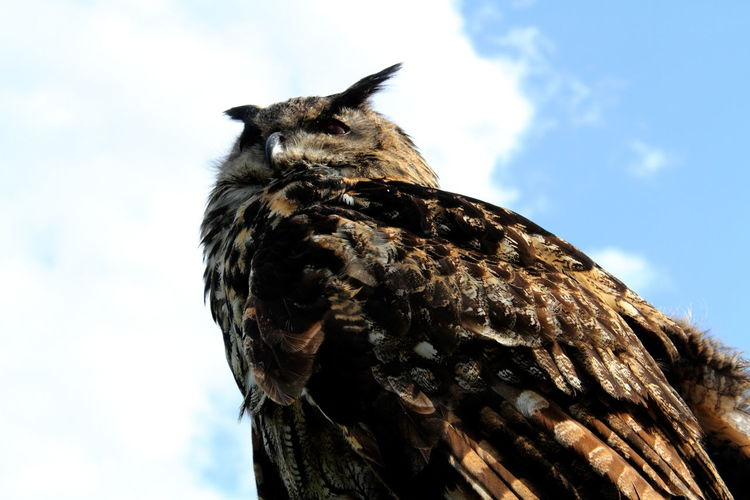 Close-Up Of Eagle Owl Against Sky